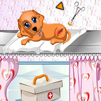 Dog Health Care